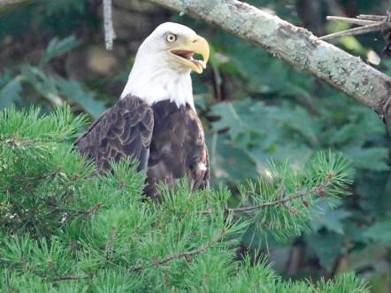 5 Reasons To Visit Lake Cumberland State Resort Park