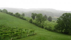 Photo of the grape vineyards of Cedar Creek Winery near Lake Cumberland Kentucky