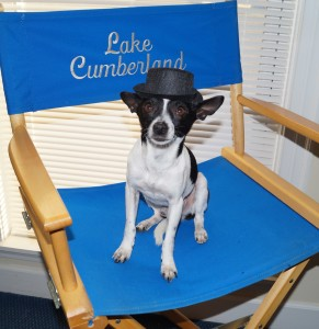 Black and white Chihuahua wearing a black top hat and sitting in the Lake Cumberland director chair
