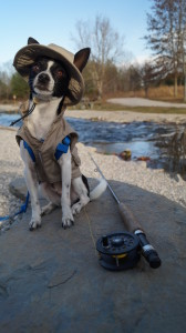 photo of small black and white Chihuahua in a fishing jacket and het