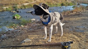 Photo of small black and white chihuahua in a fly fishing coat and hat by a trout stream in Kentucky close to Lake Cumberland