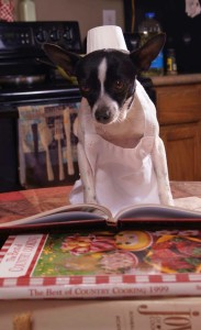 photo of small black and white Chihuahua in an apron and chef hat reading cook books.