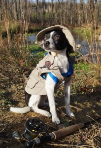 Photo of black and white Chihuahua in fly fishing outfit sitting by a trout stream with a fishing pole