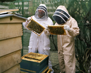 photo of two bee keepers inspecting their bees