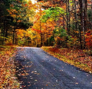 The backroads of Kentucky are the perfect way to see the beautiful colors of Kentucky's fall foliage