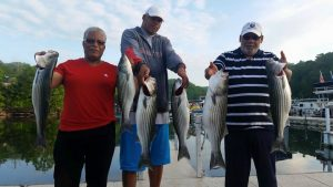 The best fishing is on Lake Cumberland for stripers